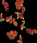Carena_Autumn Crunch_Cluster 7.png