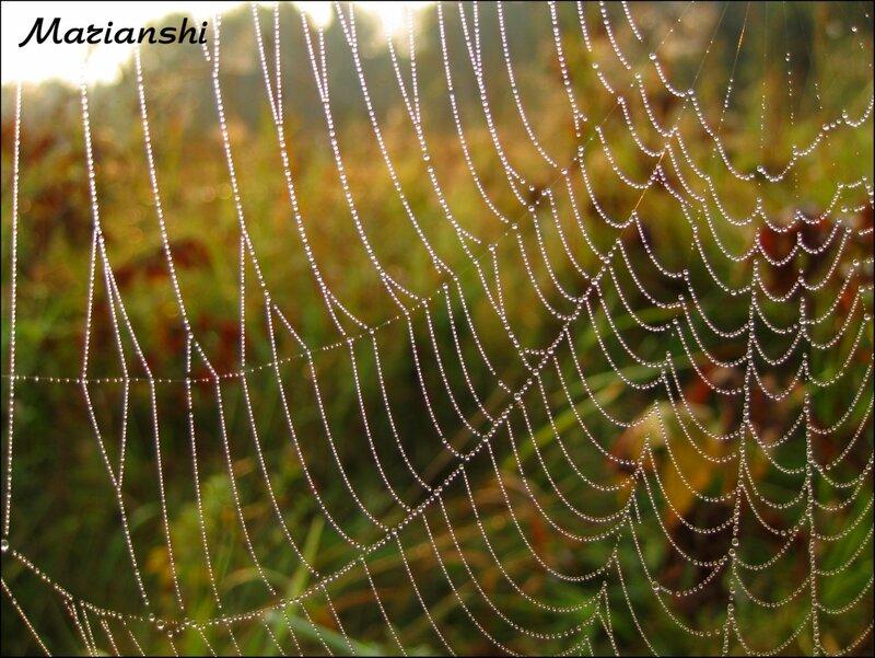 Хрустальная паутинка