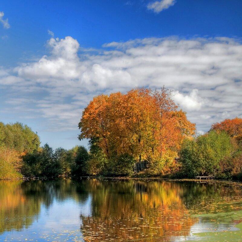 Дерево роняет тихо листья...