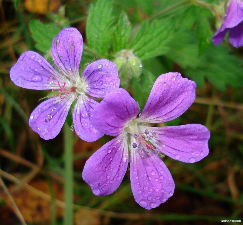 Цветок, снято 7 октября 2007 г.