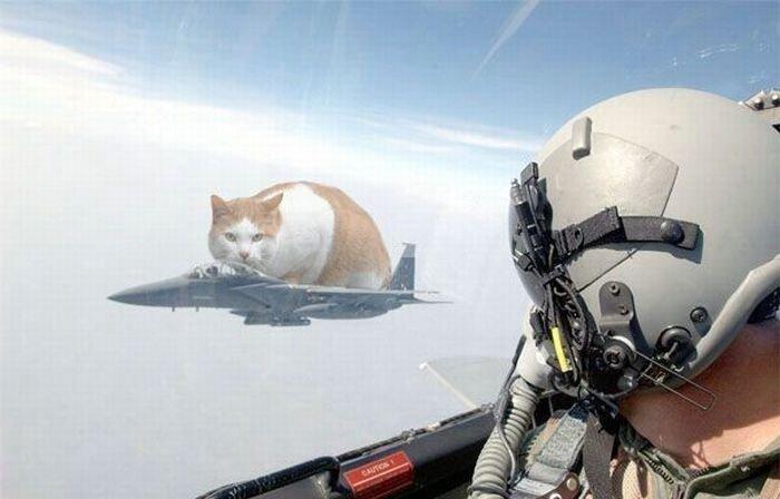 Смешные армейские будни hilarious_army_photos_13