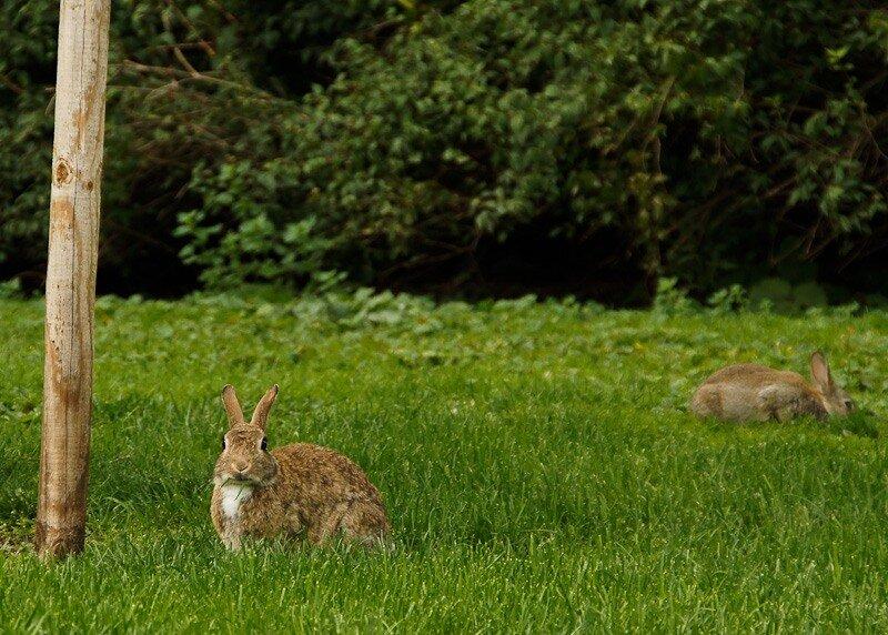 на поляне траву зайцы в полночь косили картинки можете