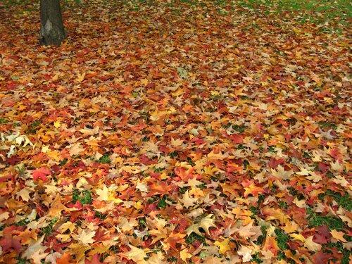 Leaves © by aurelius stock