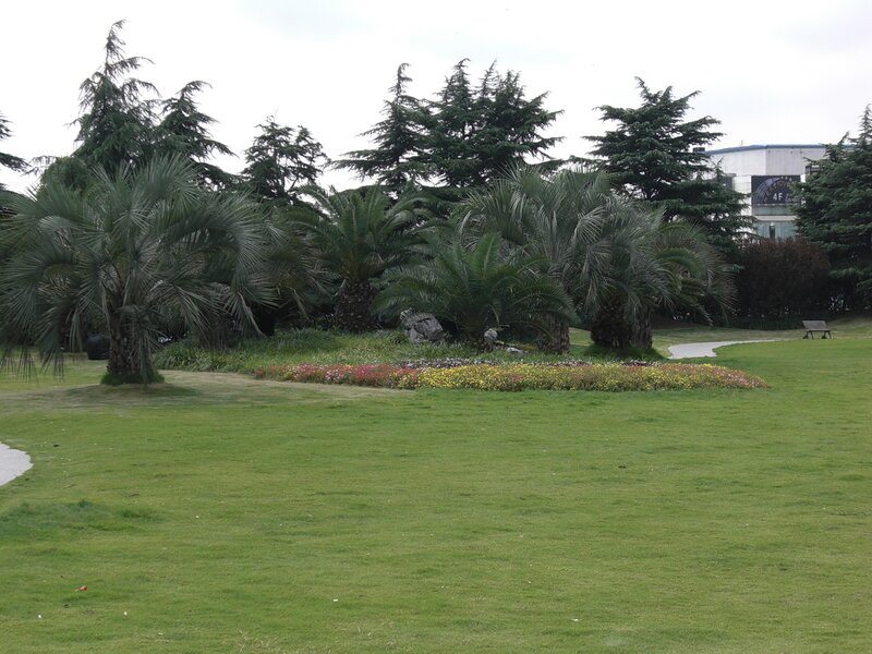 жара и пальмы