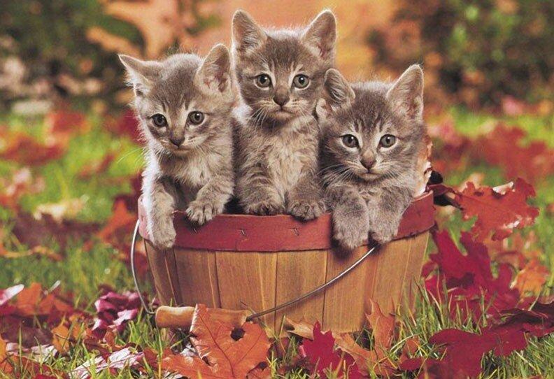Смешные котята картинки.