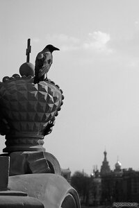Недоброе (ворона, корона, монохром, птица, Спас-на-крови)