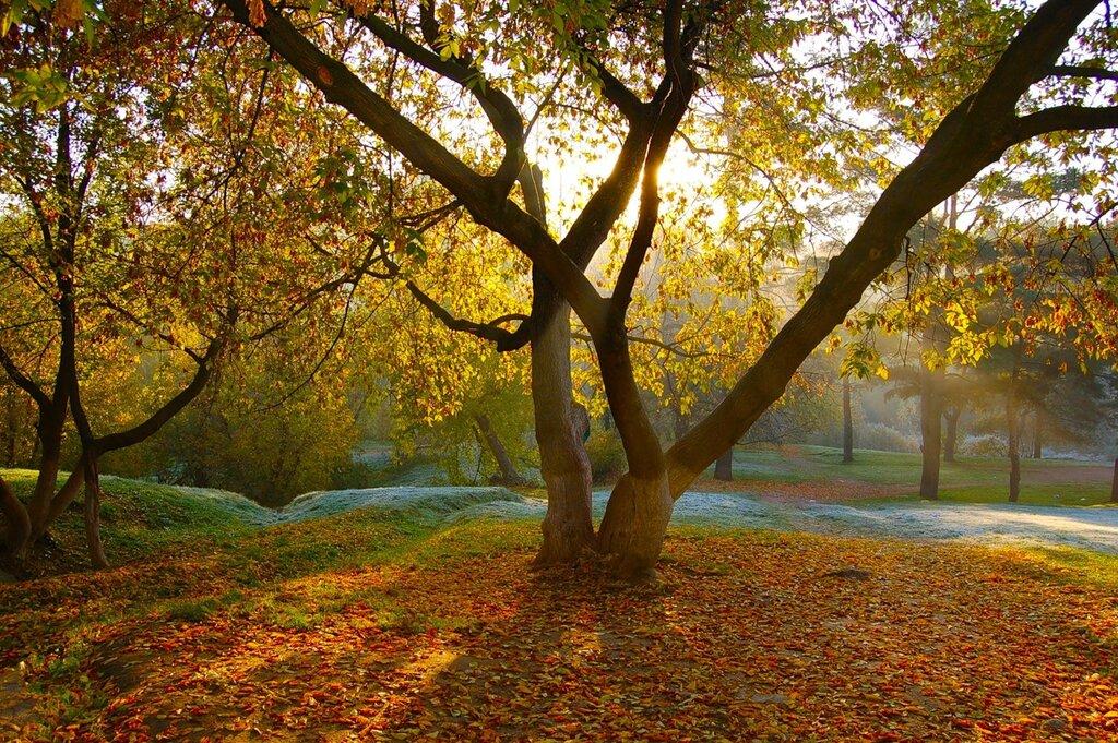 Осеннее утро