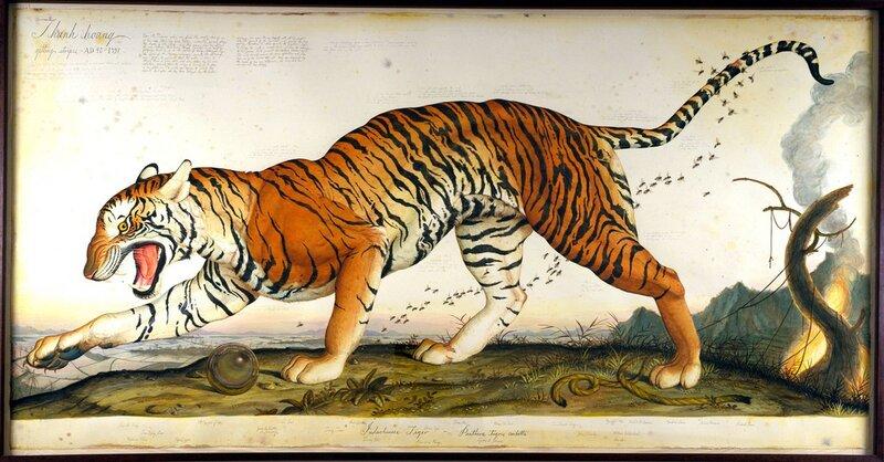 Животный мир в иллюстрациях Walton Ford