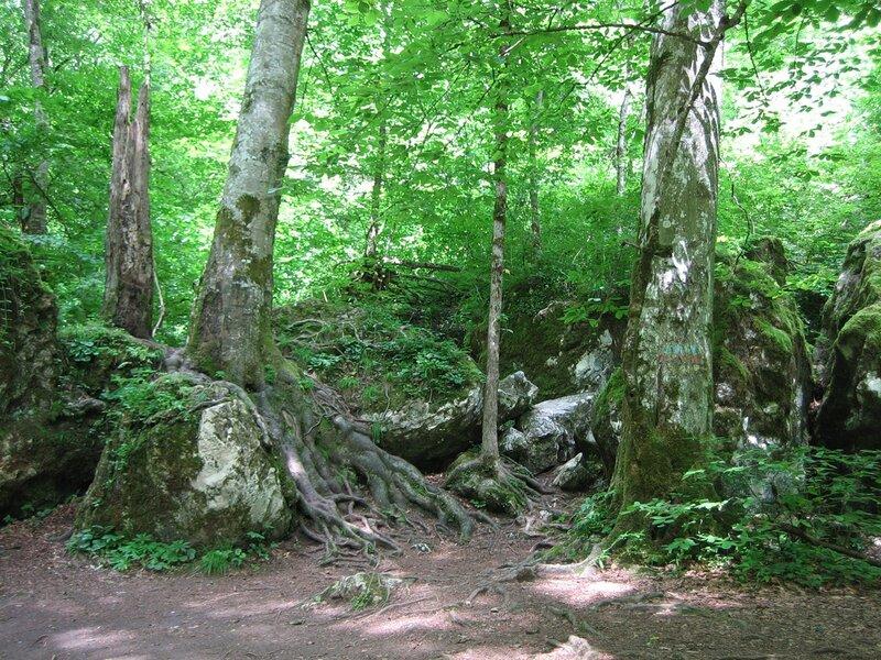 Молчанье букового леса