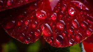 Waterdrops by J.P.Peter