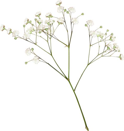 سكرابز ورود بدون تحميل سكراب ازهار بدون تحميل سكرابز باقات ورد بدون تحميل New Flower 2016 حباري منتديات حباري منتدى