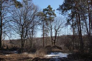 15 мартаСнег на пригреве растаял почти весь, однако почва ещё замороженная, так что сапоги не проваливаются. Ходить очень приятно.