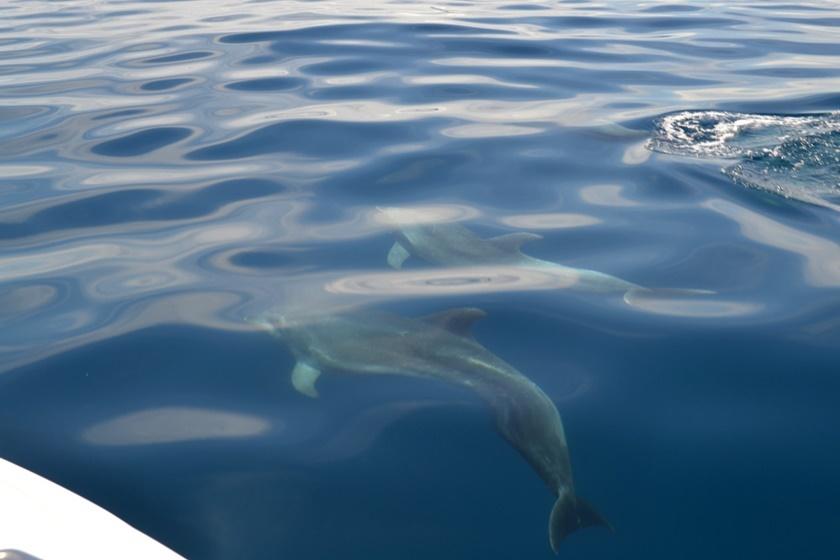 Дельфины у побережья Венесуэлы. Красивые фотографии 0 141a55 ed488d01 orig