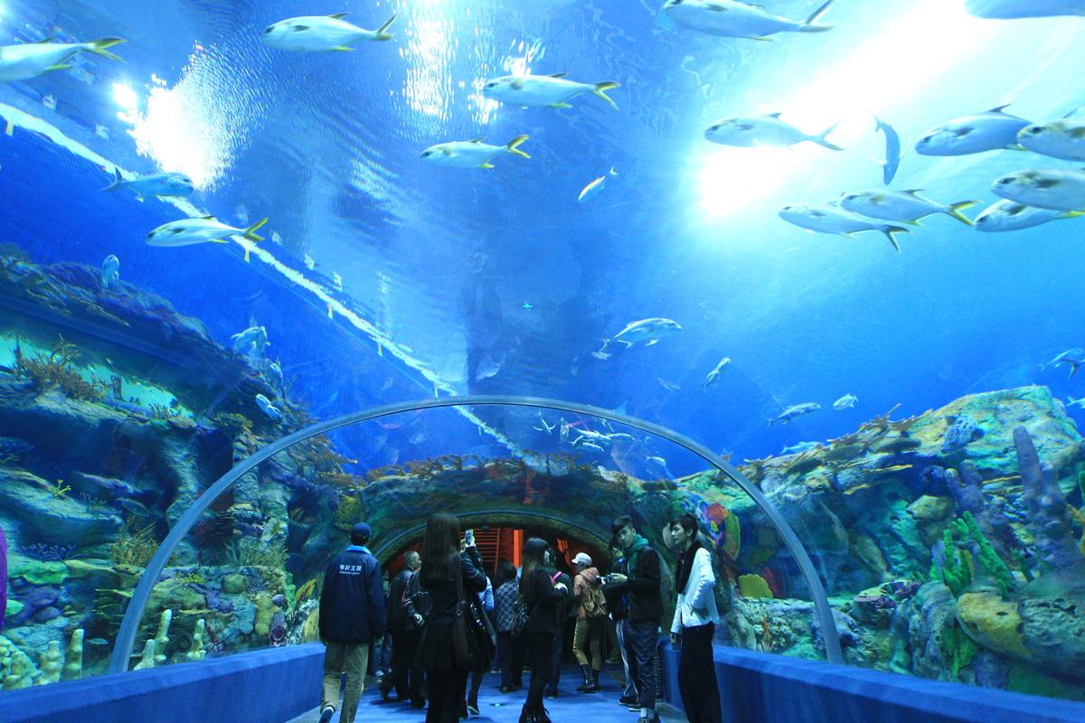 Samyj-bolshoj-okeanarium-v-mire-13-foto