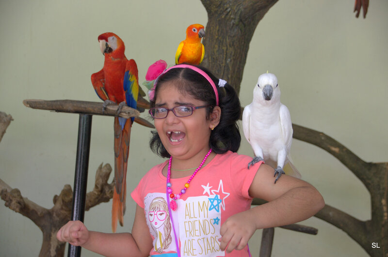 Парк птиц