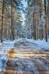 Дорога в лесу после первого снега.