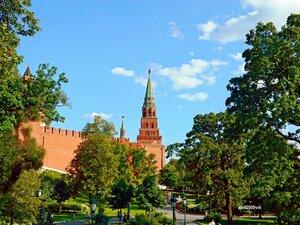 Деревья у Кремля