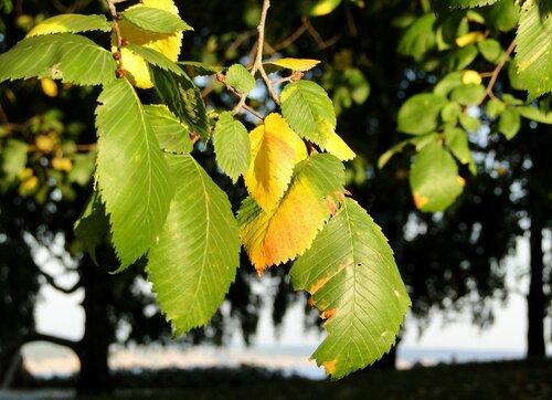 Листья сентября