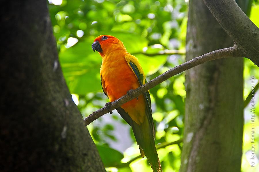 0 c4fcd bd26ff75 orig Парк птиц Jurong в Сингапуре