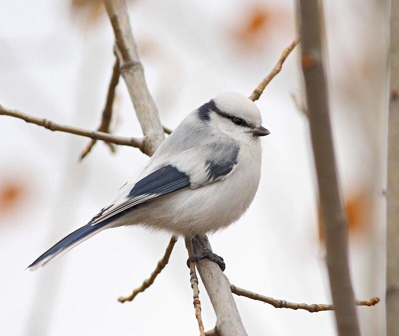 Птицы зимнего леса.