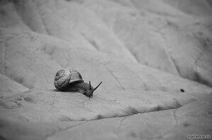 Пегас (лист, монохром, улитка)