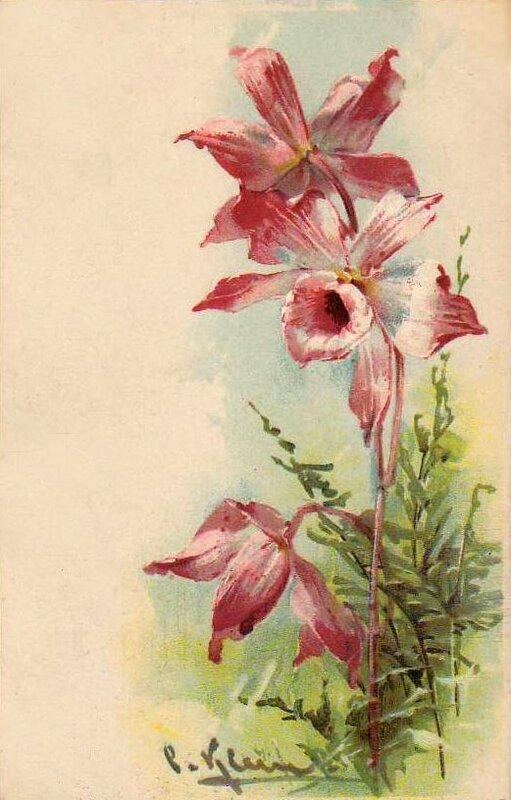 К. Кляйн. 57. Орхидеи