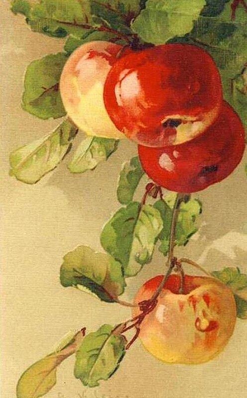 К. Кляйн.  48. Яблоки.