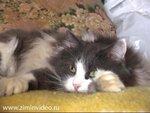 Кот,который лежал сам по себе