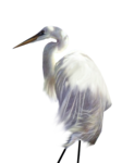 jcw_enchanted_egret.png