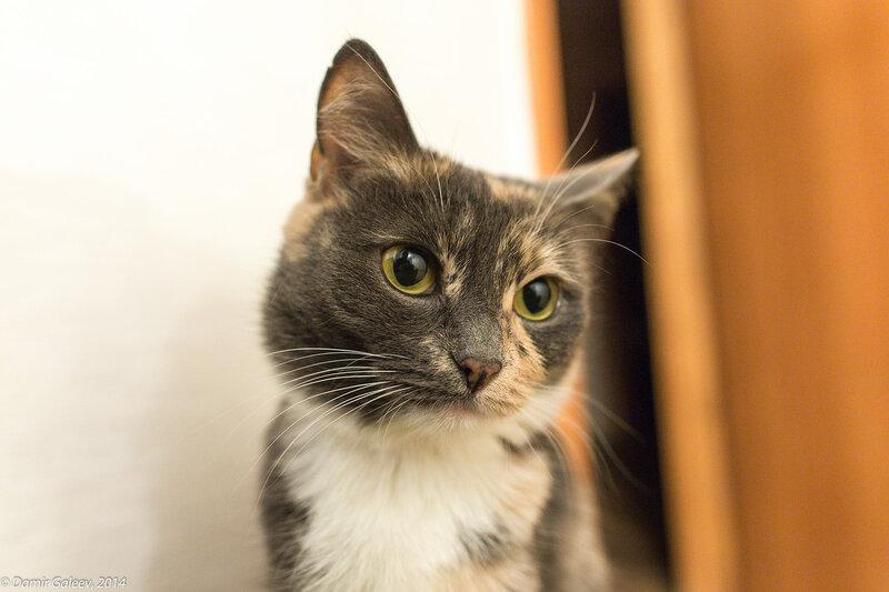 Главная фотомодель – кошка Изольда