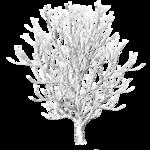 winter_tree_6_by_brokenwing3dstock-d5m1shy.png