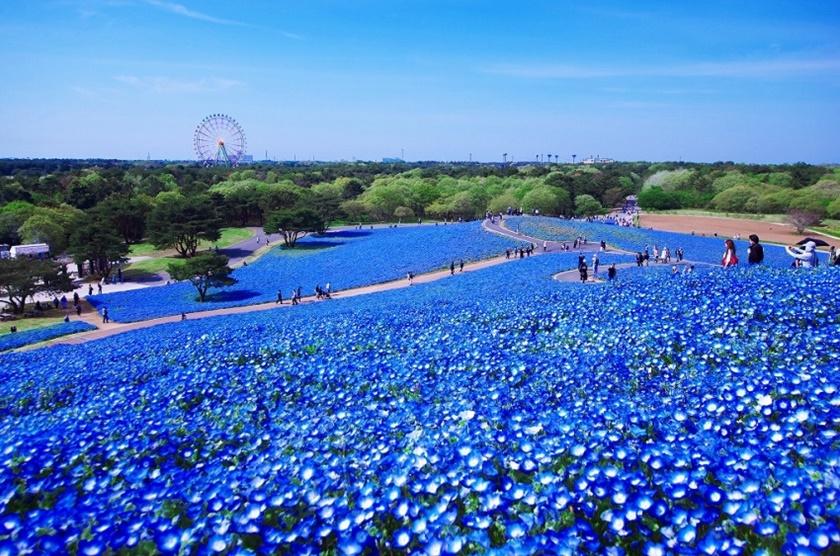 Живописный японский парк Хитати Кайхин 0 1422c0 e7787f38 orig