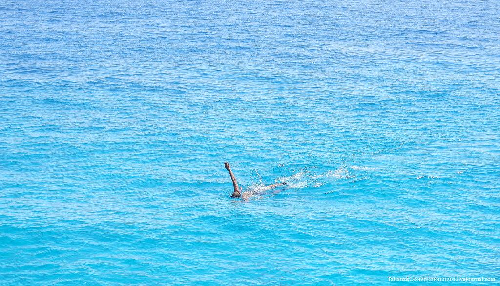 Рыбы Красного моря. Египет.