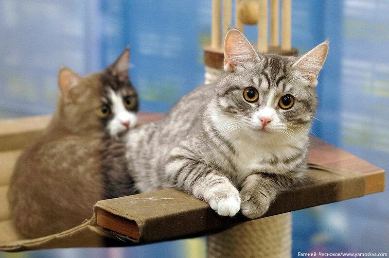 Осень. Театр кошек. Кошки. 15.10.15.14..jpg