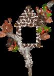 Carena_Autumn Crunch_Cluster 8.png