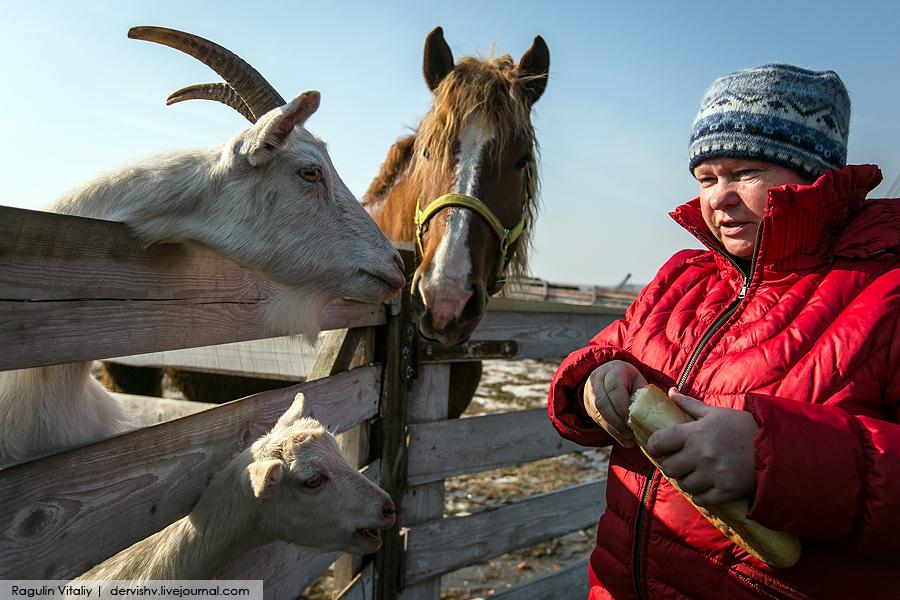 Почему власть хочет уничтожить единственного фермера в Раменском районе?