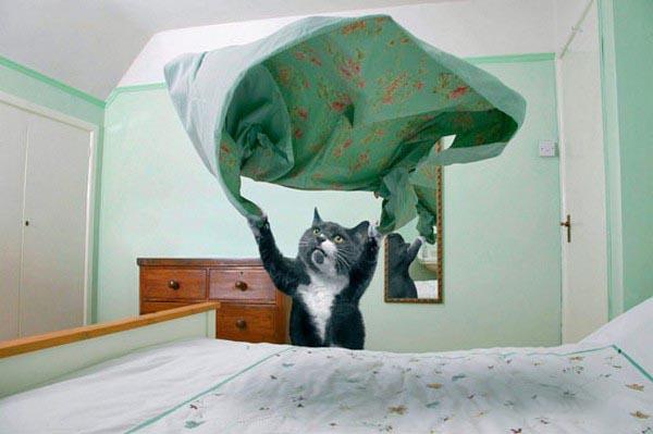 Супер-кот