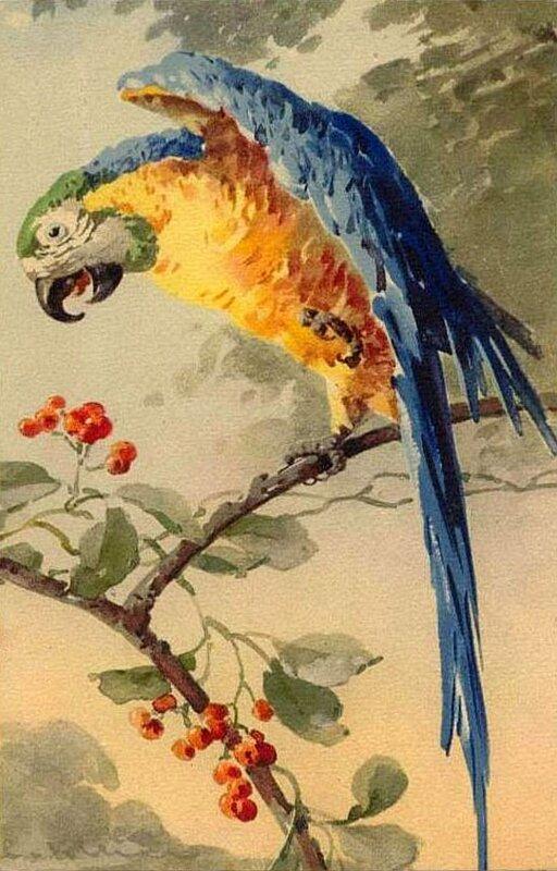К. Кляйн. 72. Попугай.