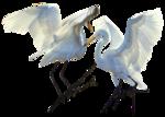 kr_bird8.png