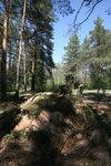 Лесопосадки