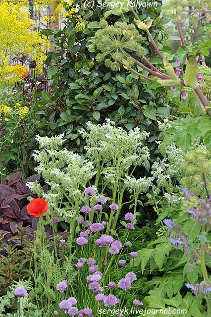 A modern Apothecary Garden (18).jpg