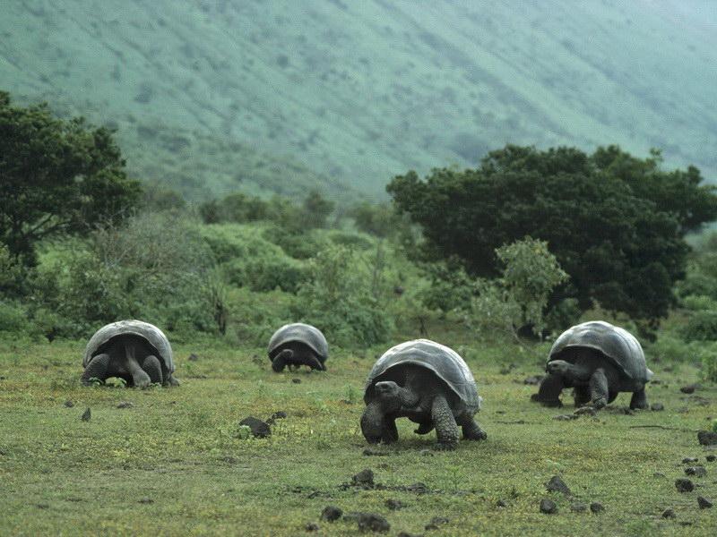 Величезні черепахи