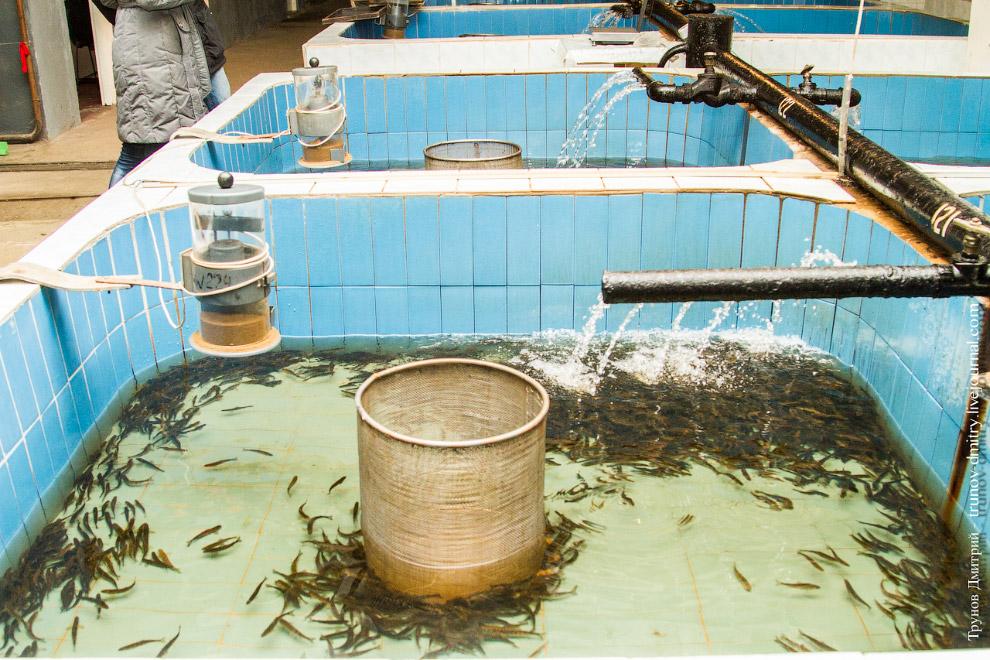 14. Чтобы рыба не уходила в трубы, каждый бассейн оборудован заградительным барабаном. Он перед вами