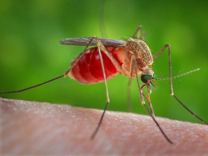 Комары — 750 тысяч смертей в год На совести надоедливых и раздражающих насекомых, которые пьют нашу