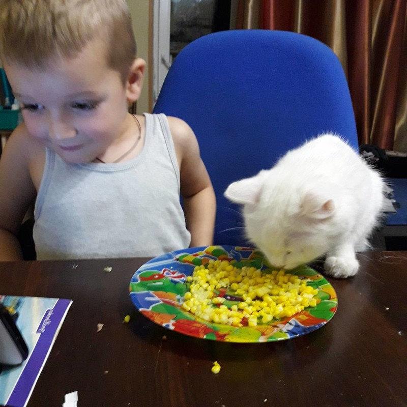 Ребенок ест из миски кота? Это проблемы кота!