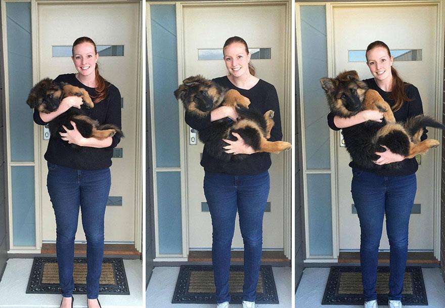Пара задокументировала, как быстро вырос их пес (5 фото)