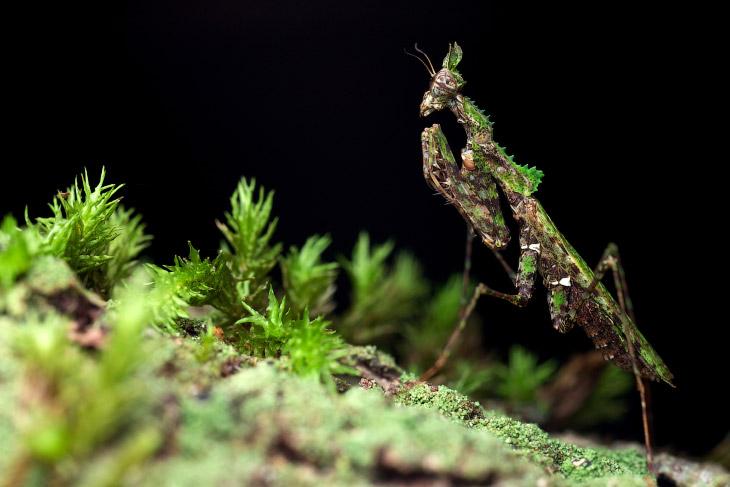 Невидимые насекомые (11 фото)