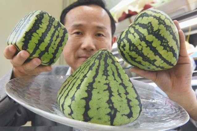 8. Арбузы бывают квадратной и другой формы Японские фермеры выращивают арбузы квадратной формы после