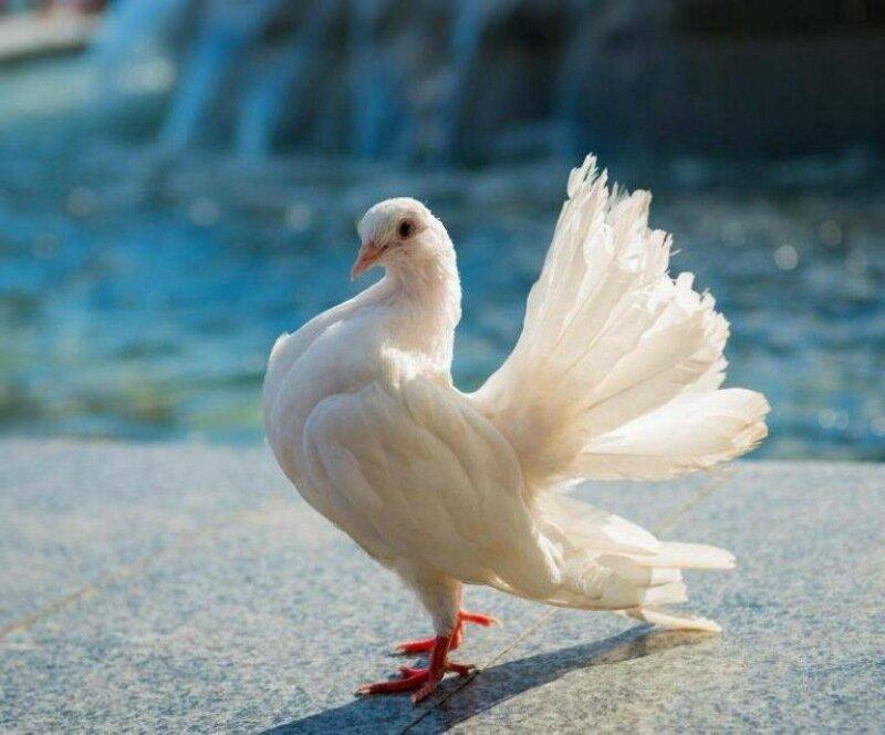 Белый-голубь-фото-768x637.jpg