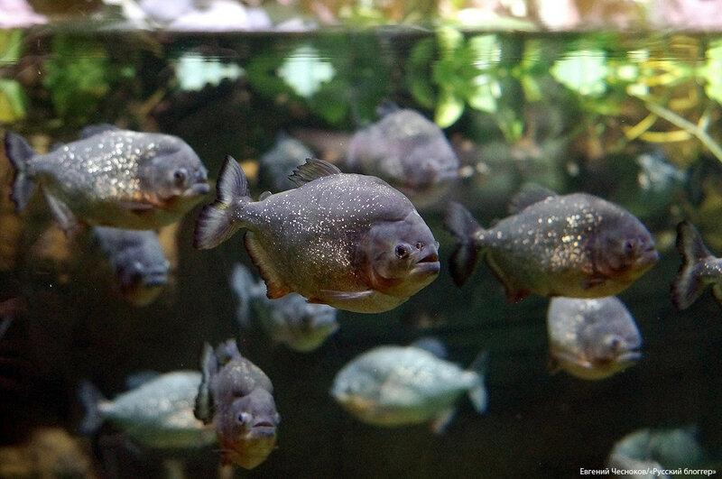 Зима. Москвариум. аквариум. 09.12.16.17..jpg
